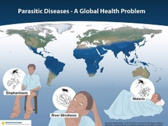 Illustration with global map of parasitic disease prevalence and people suffering from River Blindness, Lymphatic Filariasis (Elephantiasis) and Malaria
